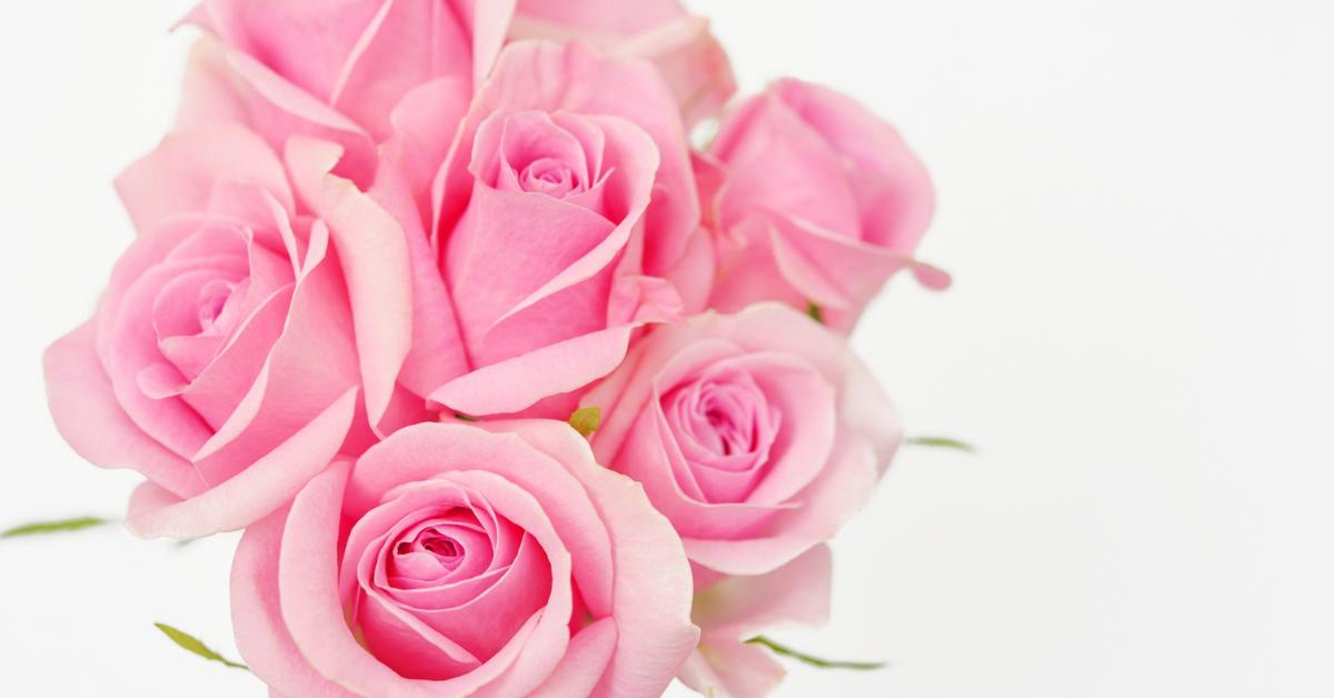 の 花 ピンク 言葉 バラ オレンジ色のバラは花言葉が豊富!大切な方に贈りたいおすすめ3選